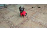 这是什么狗狗?在北碚农村捡到的,才一个月吧,就被抛弃了。